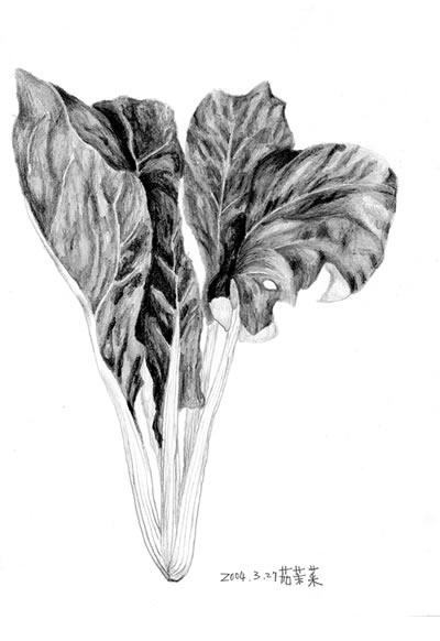 時間 : 2004 名稱 : 茄苿菜 (收錄於《失落的蔬果》)