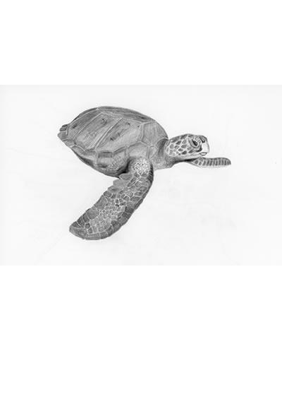 時間 : 2017 名稱 : 海龜
