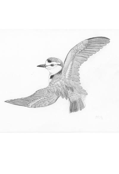 時間 : 1991 名稱 : 風鳥(3) (收錄於《風鳥皮諾查》)