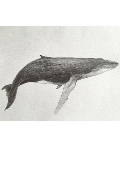 時間 : 2017 名稱 : 座頭鯨(1) (收錄於《座頭鯨赫連麼麼》)