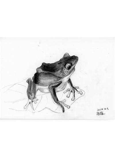 時間 : 2014 名稱 : 諸羅樹蛙