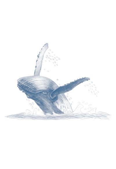 時間 : 2017 名稱 :座頭鯨(2) (收錄於《座頭鯨赫連麼麼》)