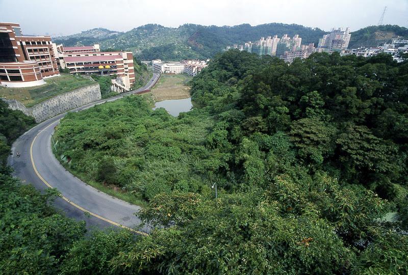 開始在住家附近的小綠山進行三年的自然觀察
