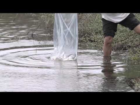 【台江】來自友善黑面琵鷺的魚塭-「虱藏美味」虱目魚罐頭禮盒宣傳影片